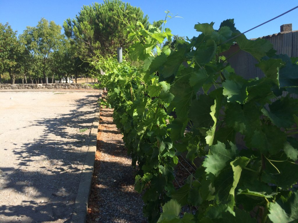 Oenotourisme, valorisation de l'image viticole, ce projet a été inité par la communauté des communes de Piémont d'Alaric.